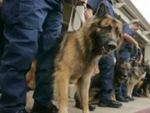 Искать наркоманов с собаками